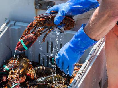 lobsterman on boat