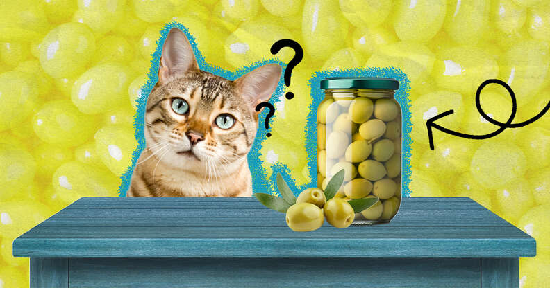 Cats and olives