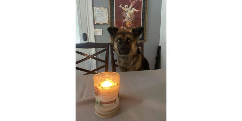 dog and pet house candle