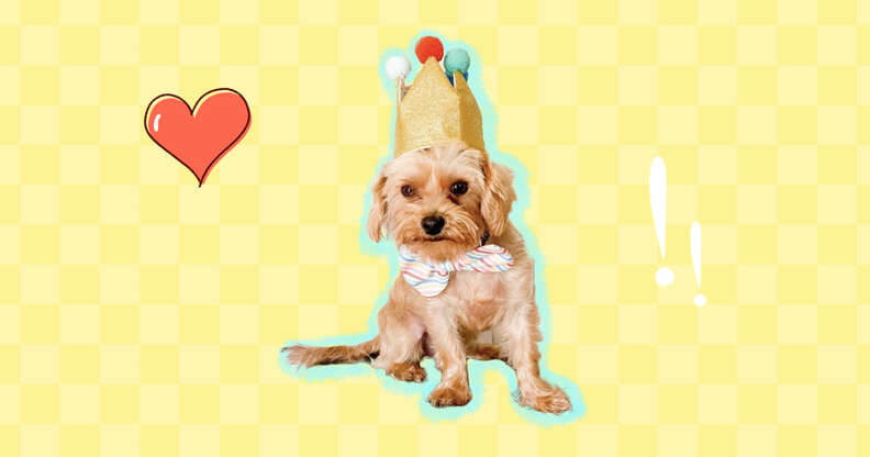 dog in crown with heart