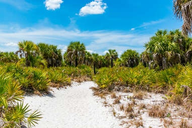 a sandy beach leading up to a grove of palm trees