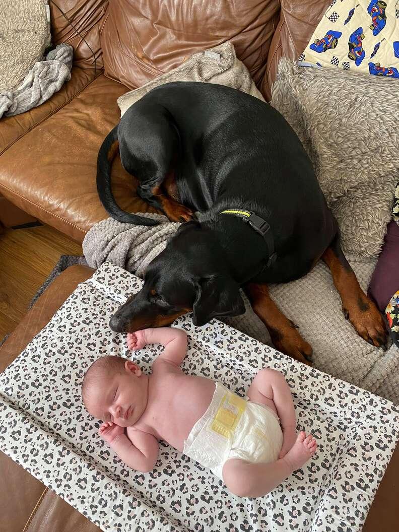 Doberman comforts baby who's crying