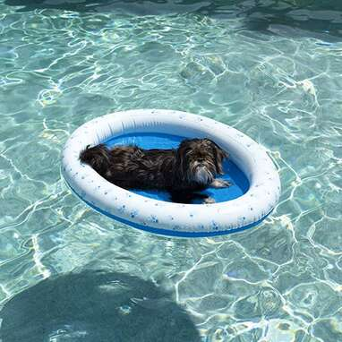 PoolCandy Inflatable Pet Float