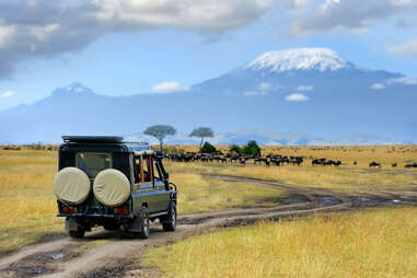 Safari game drive with the wildebeest in Kenya's Maasai Mara Reserve