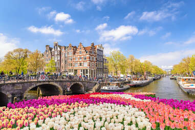 tulips line a large canal and a bridge in amsterdam
