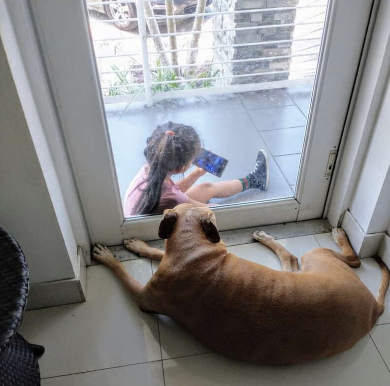 Dog watches TV with neighbor