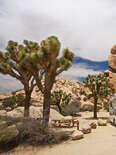 RV in the desert