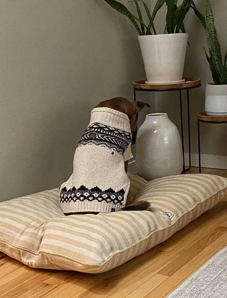 Sad shelter dog makes amazing transformation