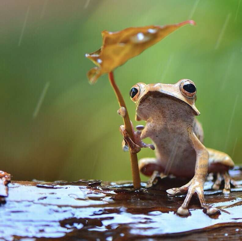 Frog hides from rain