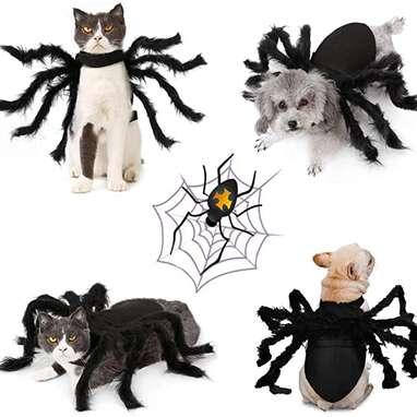 Idepet Spider Cat Costume