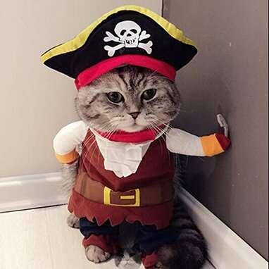 Idepet Pirate Cat Costume