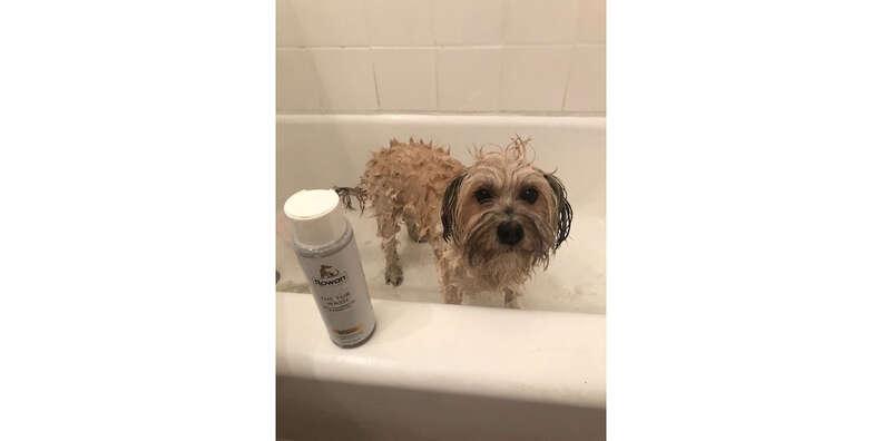rowan dog shampoo