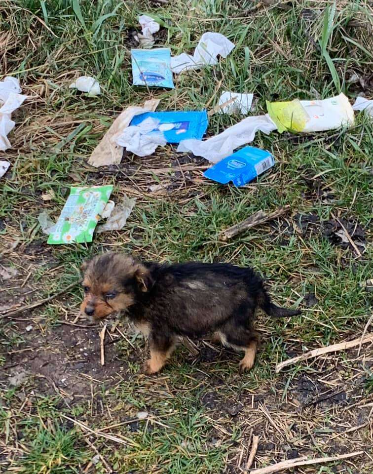 Man finds stray puppy using a shoe as shelter