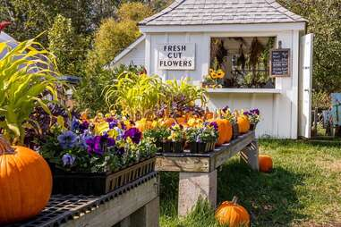 a farm stand with pumpkins, herbs, and fresh cut flowers