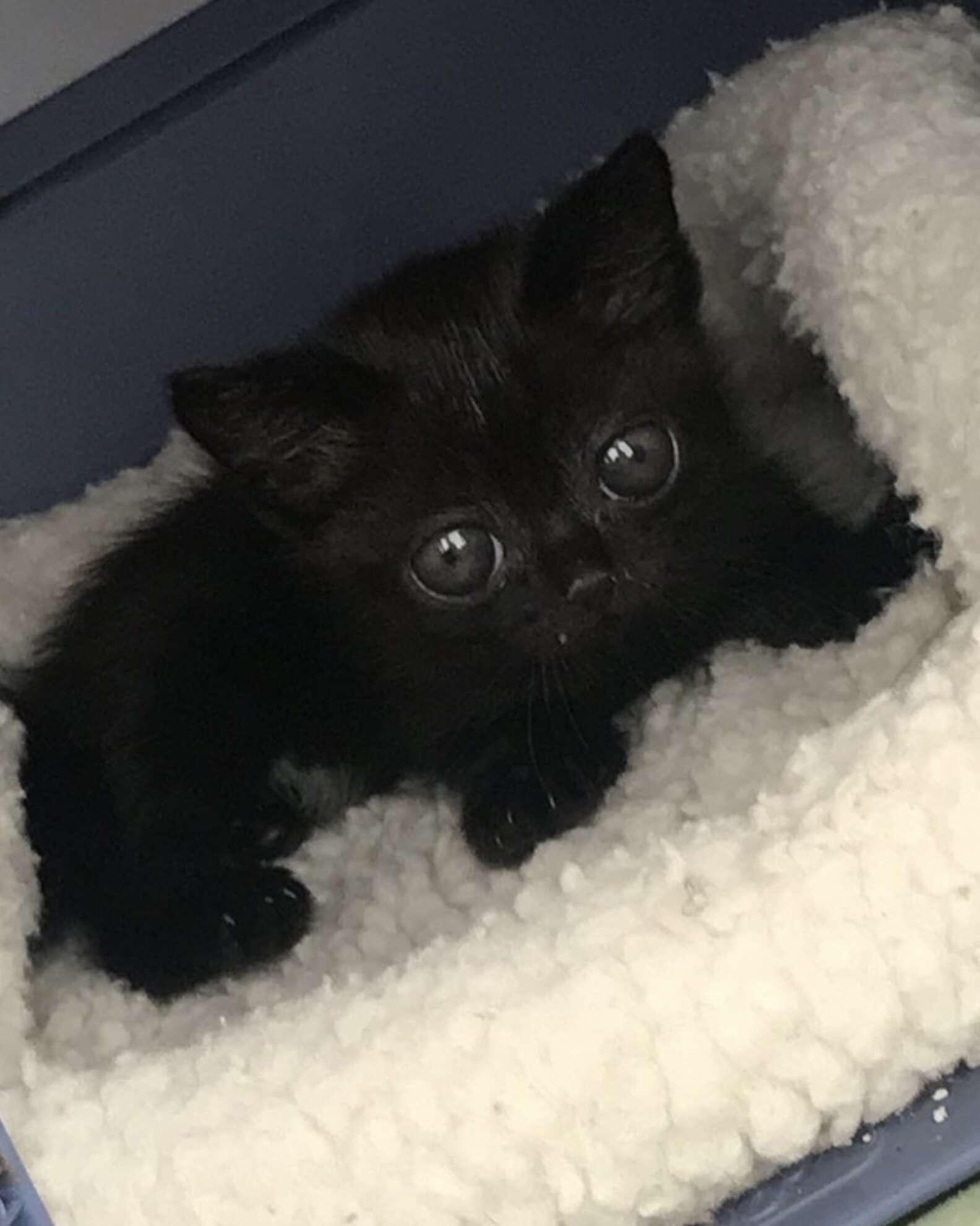 Rescue Kitten's Huge Eyes Make her Look Like an Alien