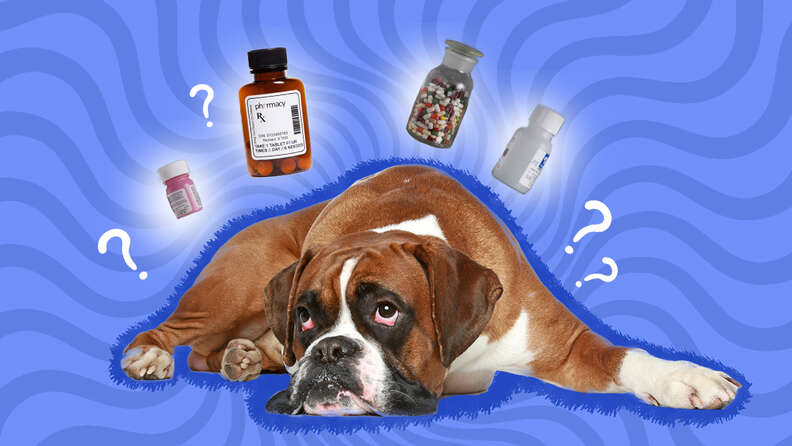 what to give a dog for pain