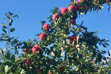 Dowse Orchards