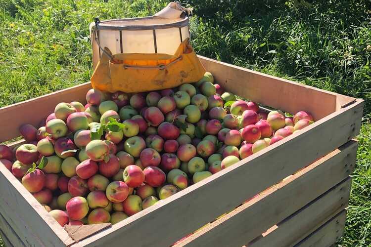 Pochuck Valley Farms