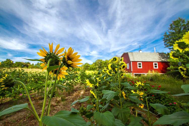 Longmeadow Farm
