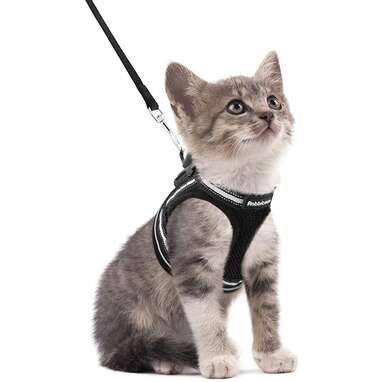 Rabbitgoo Kitten Harness