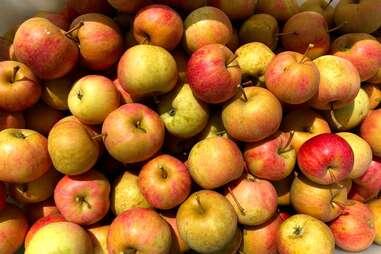 Door Creek Orchard