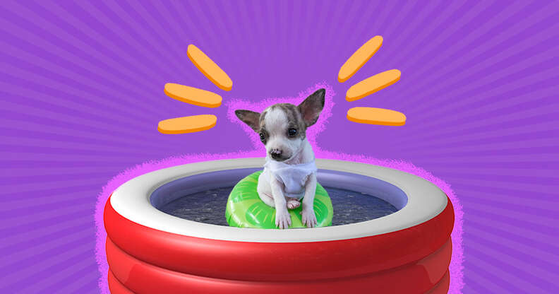 puppy in a kiddie pool