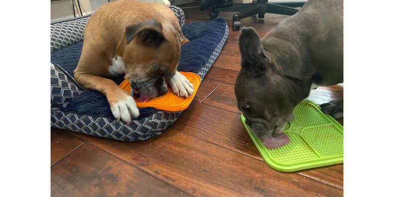 pets and iq treat mats