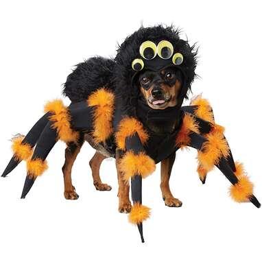 California Costumes Pet Spider Pup Costume
