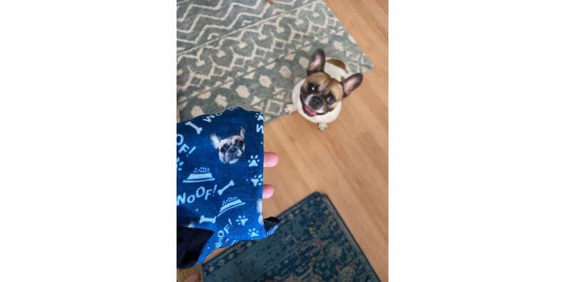 petsies custom socks