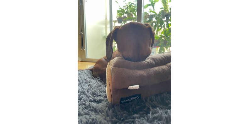 zippy paws burrow toy