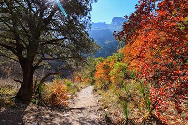 path through fall foliage to mountains