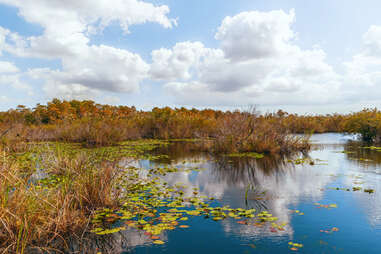 View of freshwater marsh from Anhinga Trail boardwalk in Everglades National Park