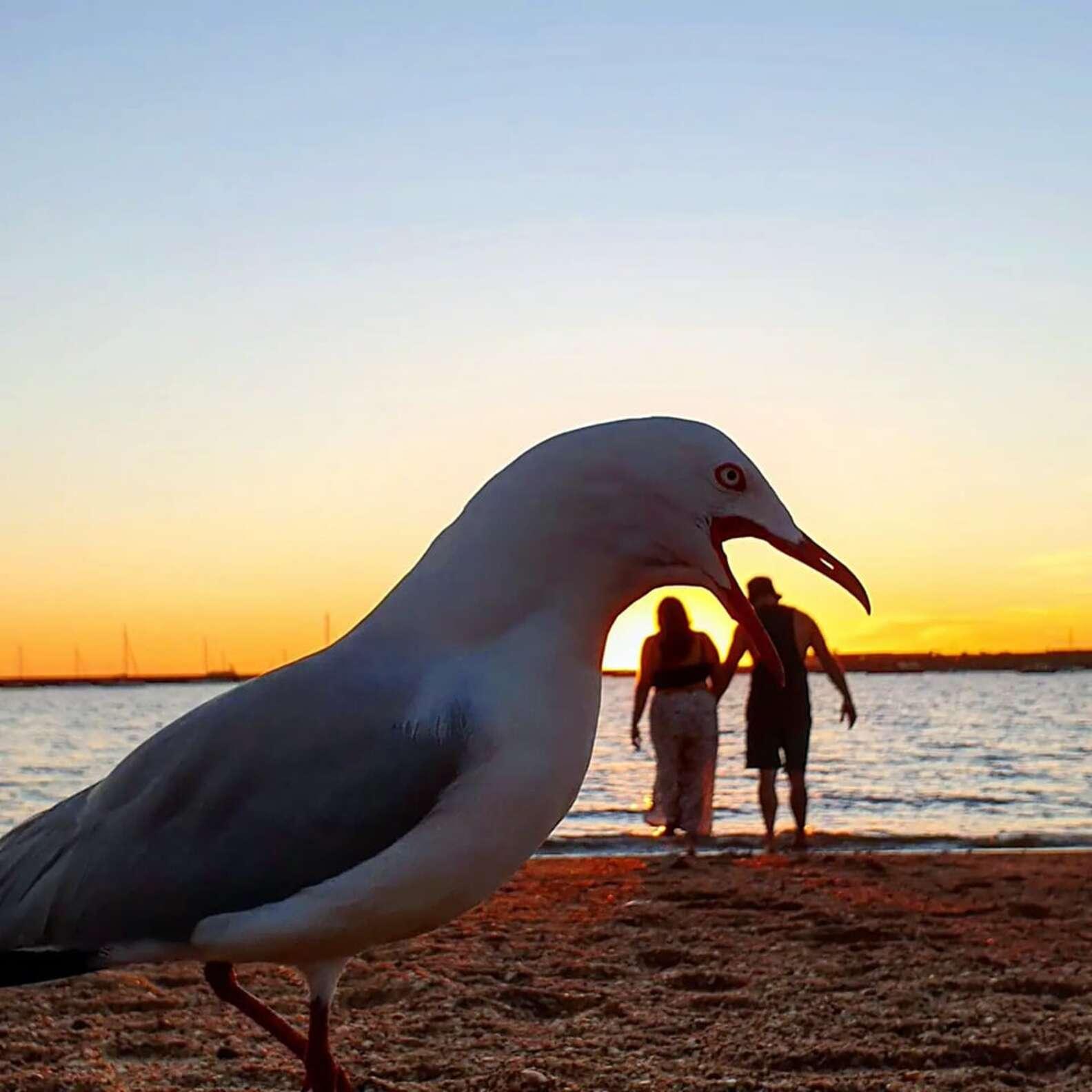 Seagulls Ruin Couple's Plan to Record Cute Beach Moment