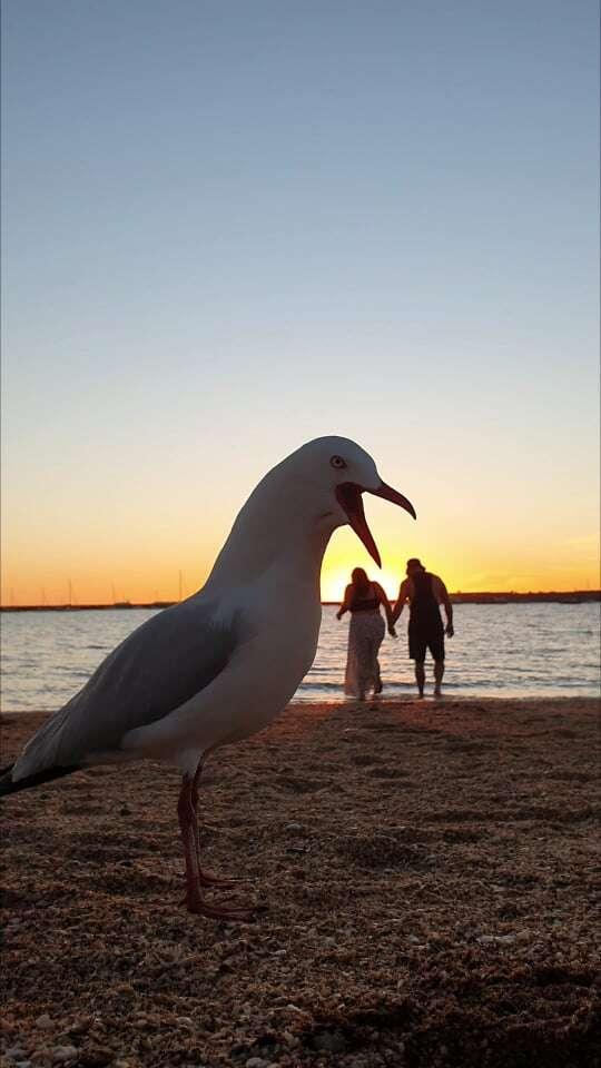 seagull photobomb