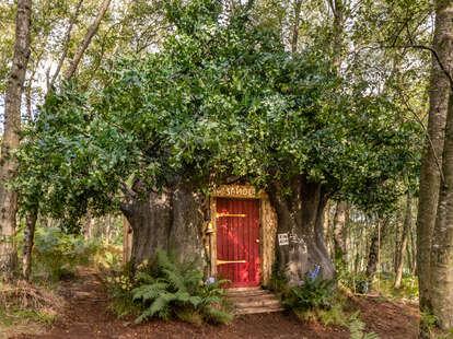airbnb winnie the pooh house