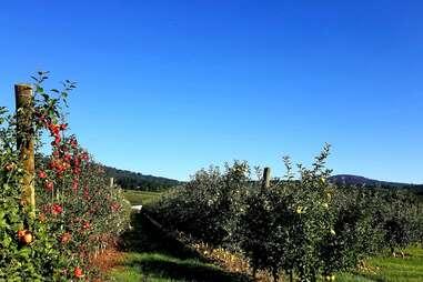 Catoctin Mountain Orchard
