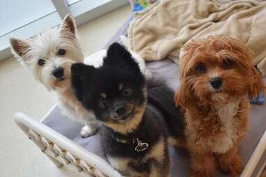Dog City Daycare - Spa - Boarding
