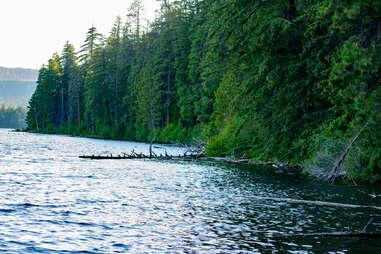 Shoreline of Suttle Lake