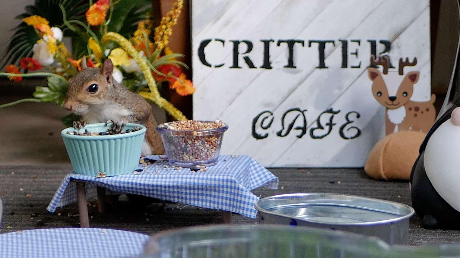 Critter Cafe