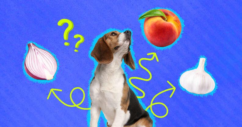 dog with onion, garlic, peach
