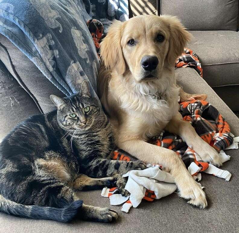 Cat locks dog brother in crate
