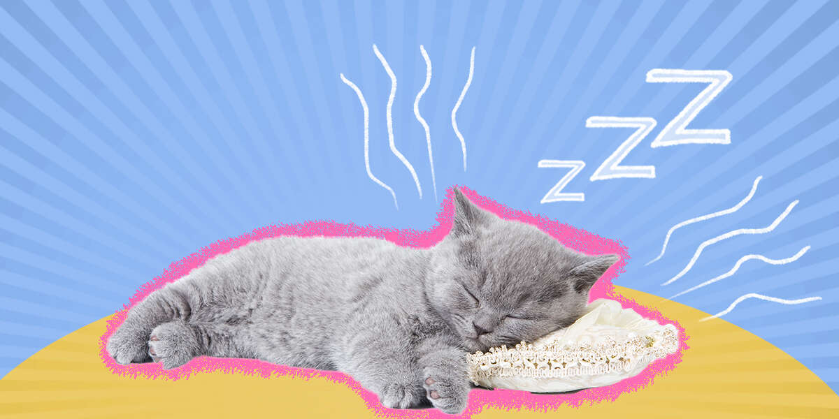Why Does My Cat Snore?