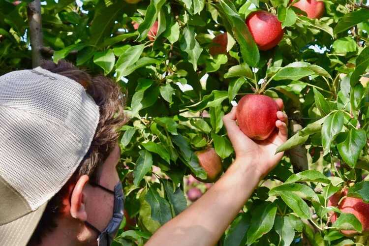 Harbes Farm Orchard