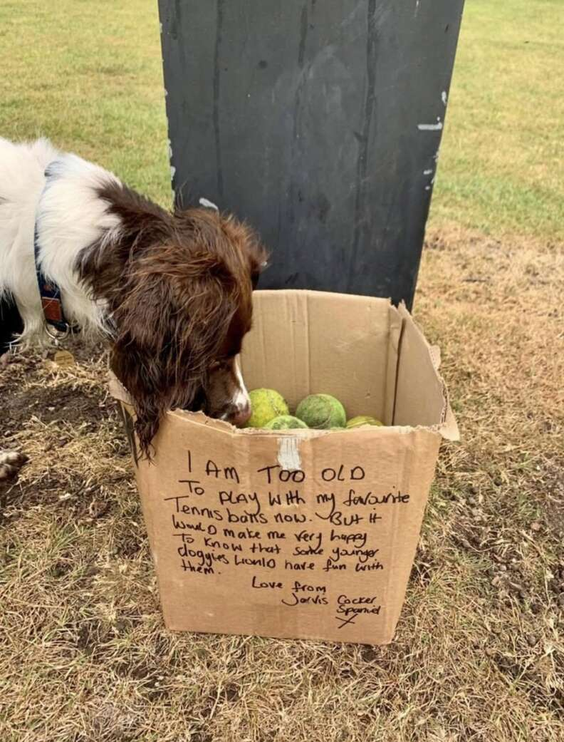 Senior dog donates his tennis balls