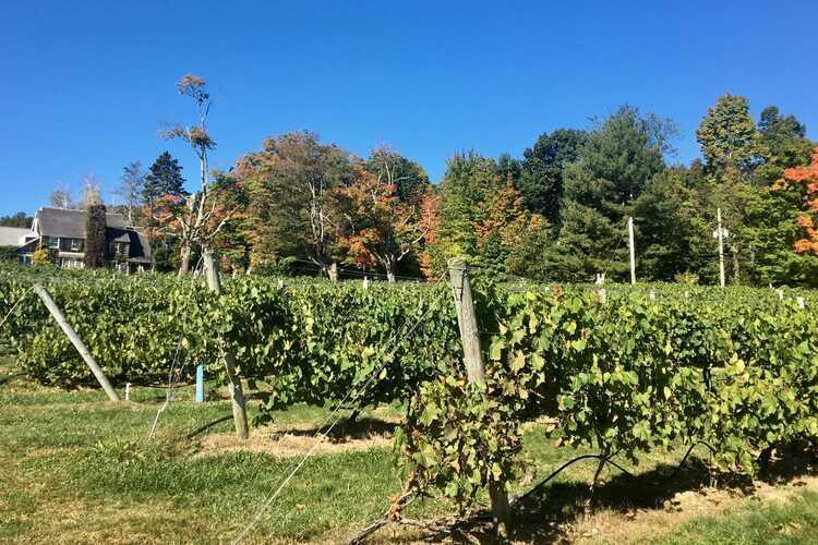Nashoba Valley Winery