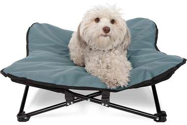 Paws & Pals Elevated Pet Bed