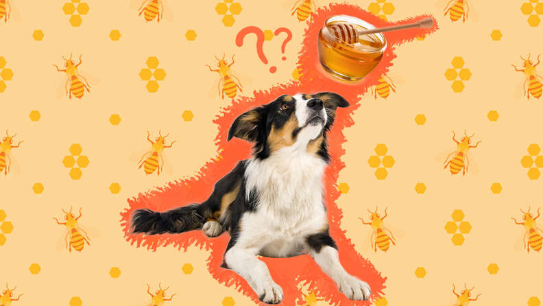 Dog and honey