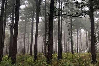 Tyler State Park - Texas Parks and Wildlife