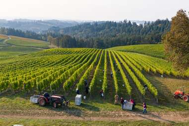 people working on a sweeping winery at sunset