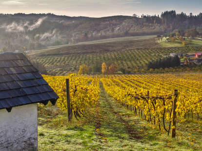 a rolling vineyard in autumn